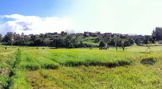Terreno de cultivo