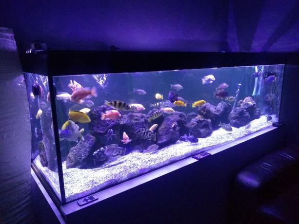 Oświetlenie do akwarium LED na wymiar,Akwarium morskie,słodkowodne