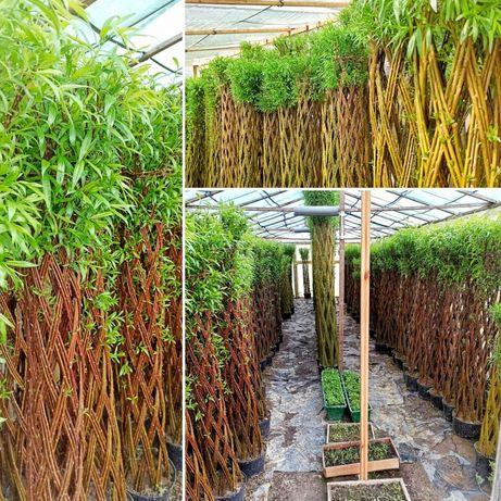 Партнерство по реалізації плетених дерев з лози.