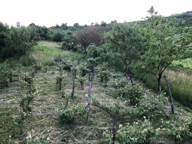 Земельна ділянка 31 сот. під забудову Закарпаття, смт Чинадієво
