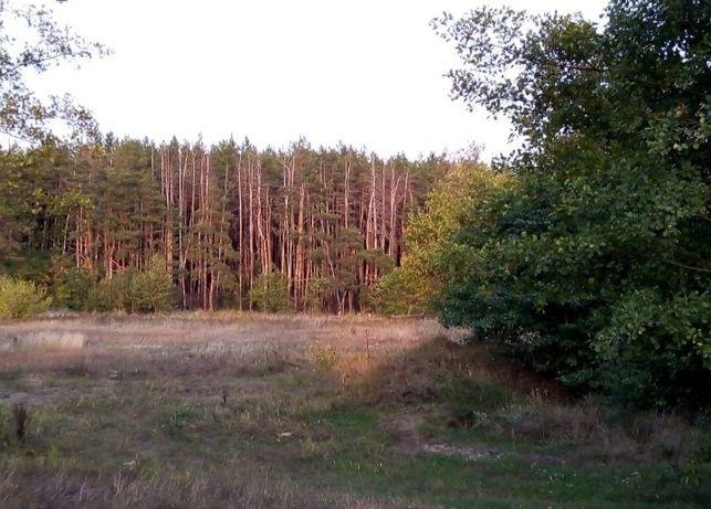 Земельный участок !42 сотки ровный! (лес, река) Келеберда, Прохоровка