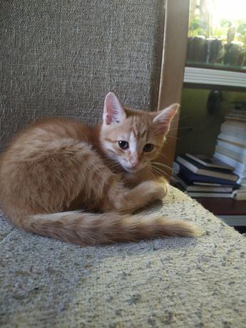 Дружелюбный рыжий котёнок