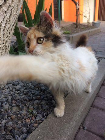 Киця шукає дім