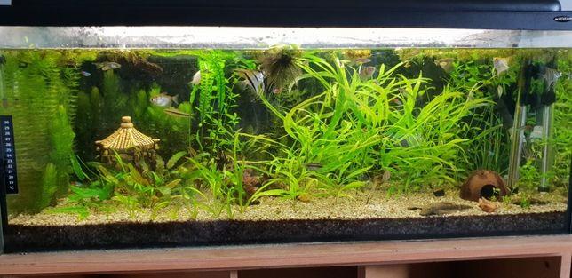 Zamienie rośliny / roślinki akwariowe na rybki