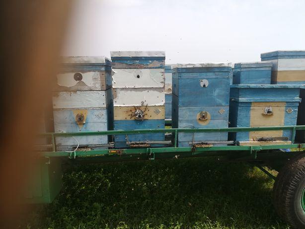 Прицеп с пчелами