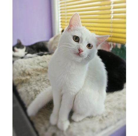 Белоснежные красивейшие Котята ищут дом