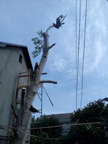 Спилить дерево аккуратно,быстро,недорого,100% ничего не повредив