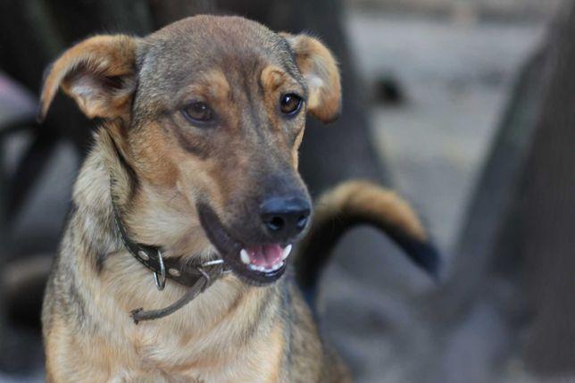 Молодые стерилизованные собачки в ожидании любящих хозяев!