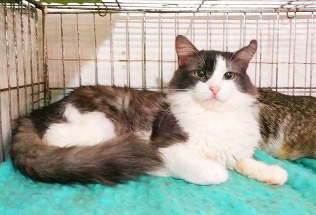 Діловитий хвостик Нельсон | чорно-білий котик | кот, котенок 1 рік