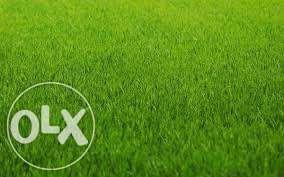 Семена газонных трав (газонна трава) насіння газонних трав -универсал