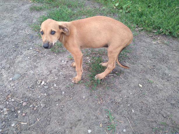 Charty greyhound