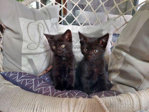 Kotki koteczki młode