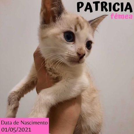 Gatinha 3 meses para adoção (Patricia)