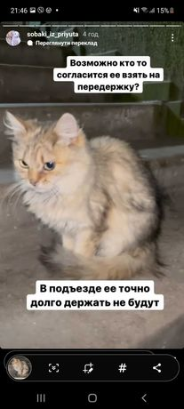 Пропала кошка Воскресенка