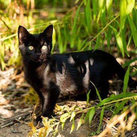 Отдам чёрного котенка ,мальчик ,3 месяца