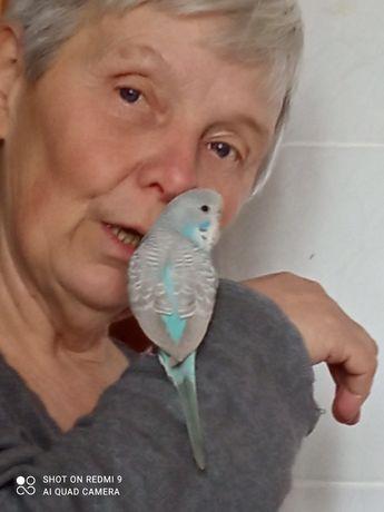 Продам  говорящего  ручного попугая получеха