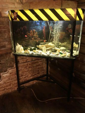 Акваріум, з рибками