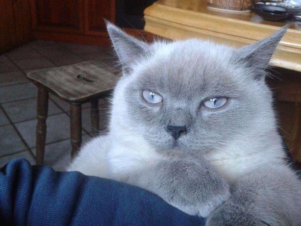 Шикарный кот, клубный приглашает на вязку