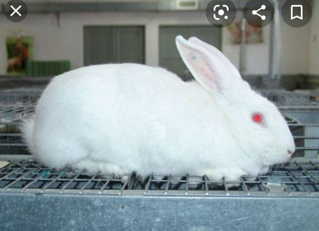 Klatkę do królika i 2 króliki