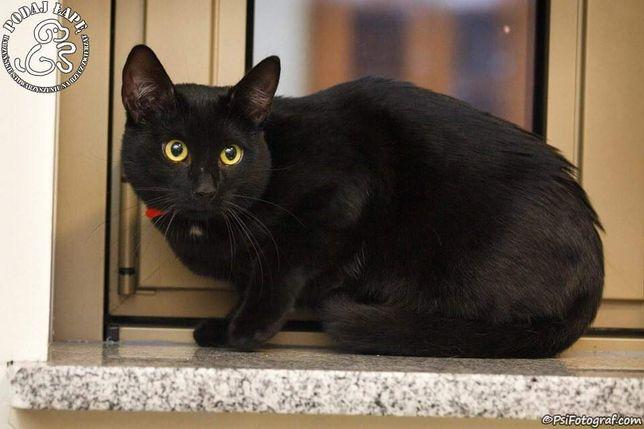 Rezerwacja - Młody kotek Mati do adopcji tylko do dobrego domu