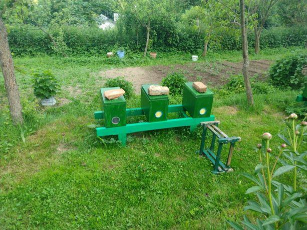 Pszczoły odklady z ulikiem