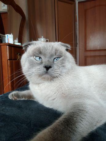Вязка красавчика кота