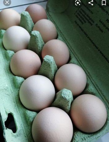 Jajka swojskie od kur z wolnego wybiegu