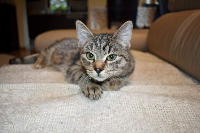 Grammi, piękna kociczka szuka domu