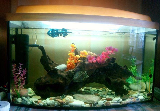 Эксклюзивный аквариум