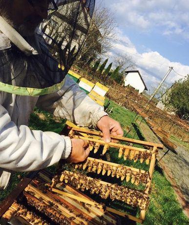 Matki pszczele - dostępne od ręki - GP Sowa