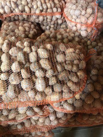 Ziemniaki o wielkosci sadzeniaka, transport do klienta.
