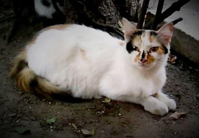 Ляля, потому что красивая))