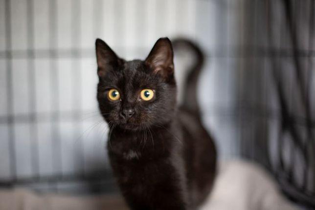 Pół roczny Pietruch szuka domu - koci ideał