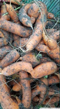 Marchew odpadowa marchewka odpadowa dla zwierząt