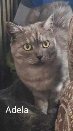 Kocia przyjaciółka szuka domu