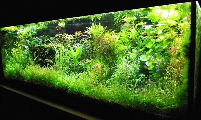 Piękne rośliny akwariowe - 30 gatunków - tylko 1 zł za szt. - wysyłka