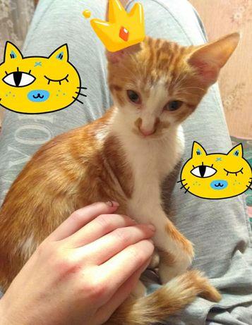 Мышелов котик бесплатно в добрые руки
