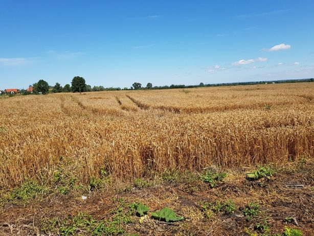 Działka rolna 132 ha IV klasa - Jegłownik pod Elblągiem - OKAZYJNA CEN