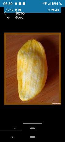 Семена карликового манго