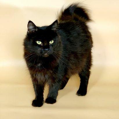 Невероятная девочка ищет семью котенок котята кошеня кот кошка котеня