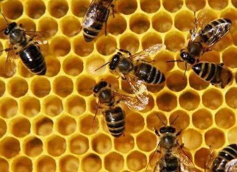 Пчелы,Пчелопакеты