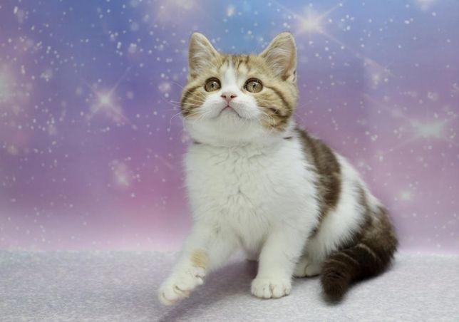 Котик\котёнок\ласковый малыш