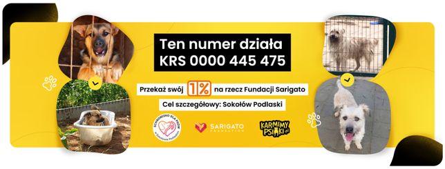 1% podatku na Schronisko dla Psów w Sokołowie Podlaskim