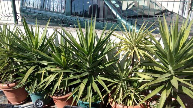 plantas fiteiras