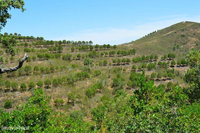Terrenos Saboia - Odemira - Alentejo