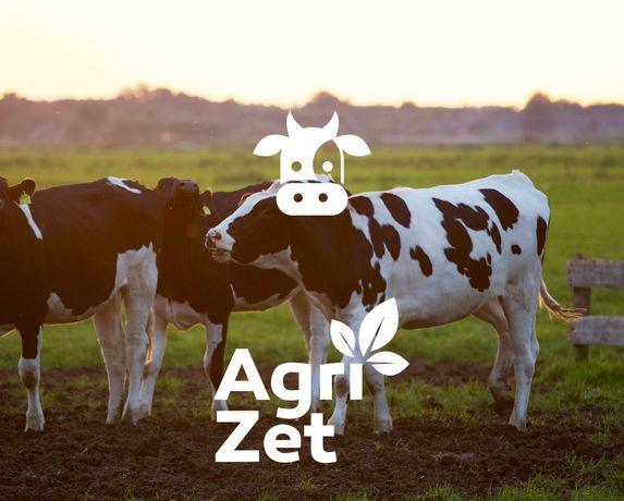 Mieszanka dla krów mlecznych | dobre nasiona traw | OKAZJA !