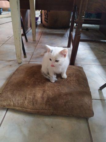 Котиня котик просто так безкоштовно