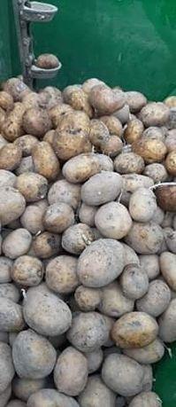 Oddam ziemniaki za darmo