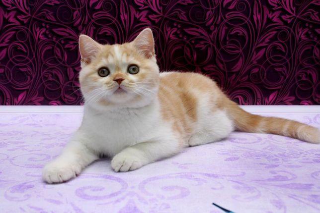 Классный котенок с прививками.