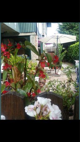 Alugo para casa de campo a 30 km do Portoem Paredes